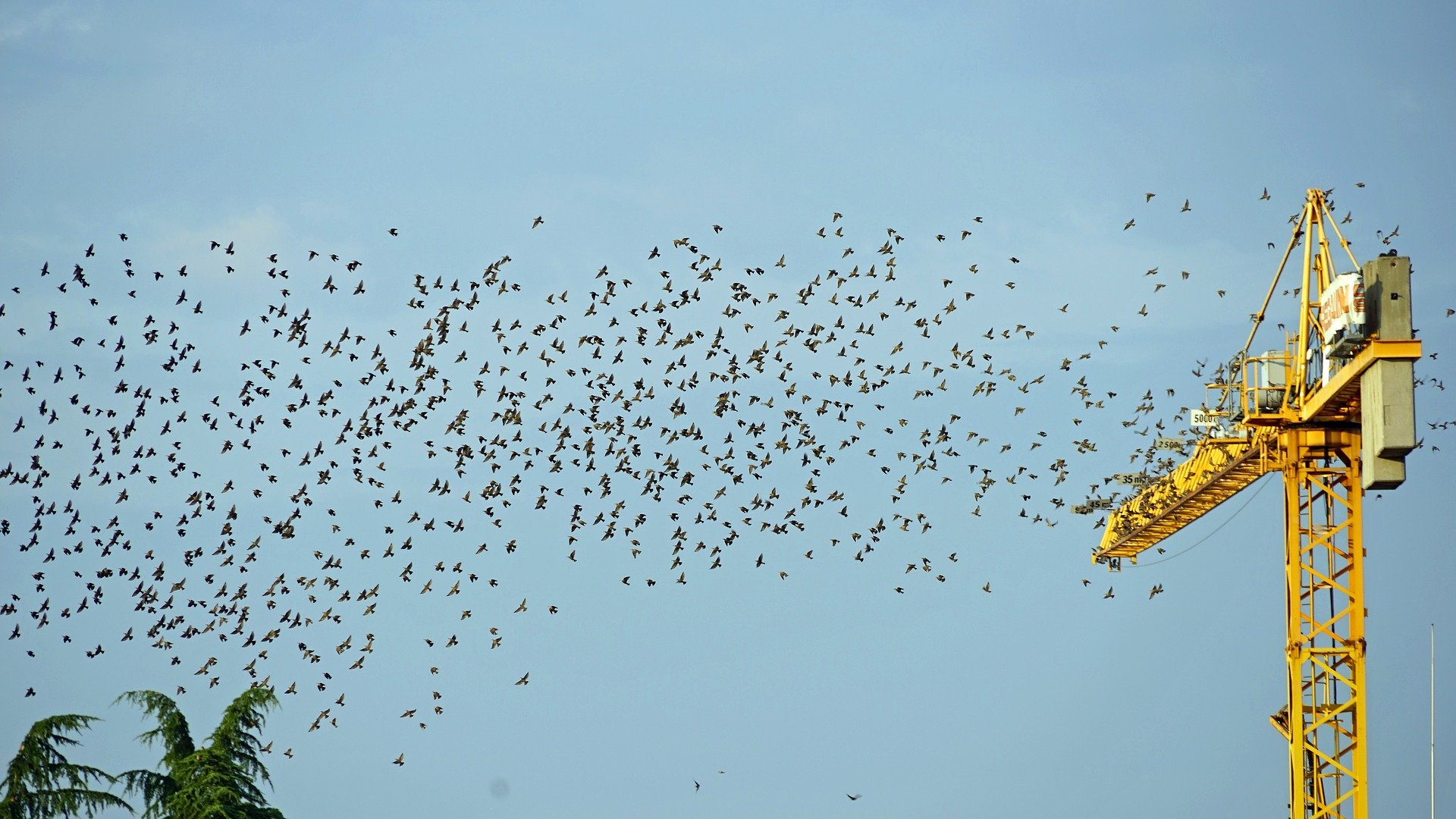 MaxPixel.freegreatpicture.com-Fly-Flock-Of-Birds-Crane-Bird-Migration-2147788