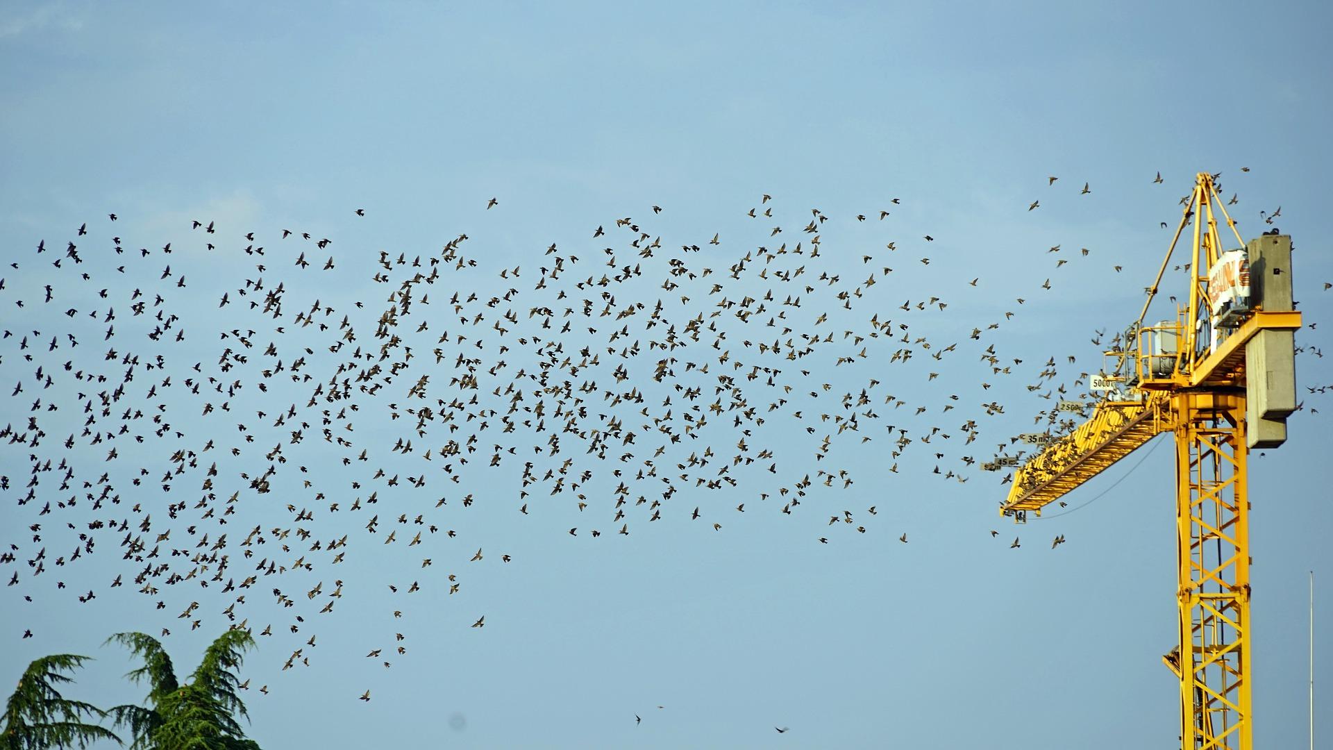 MaxPixel.freegreatpicture.com-Fly-Flock-Of-Birds-Crane-Bird-Migration-2147788